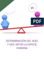 Determinación del sexo y gen SRY2016_6_20P8_44_21.pdf