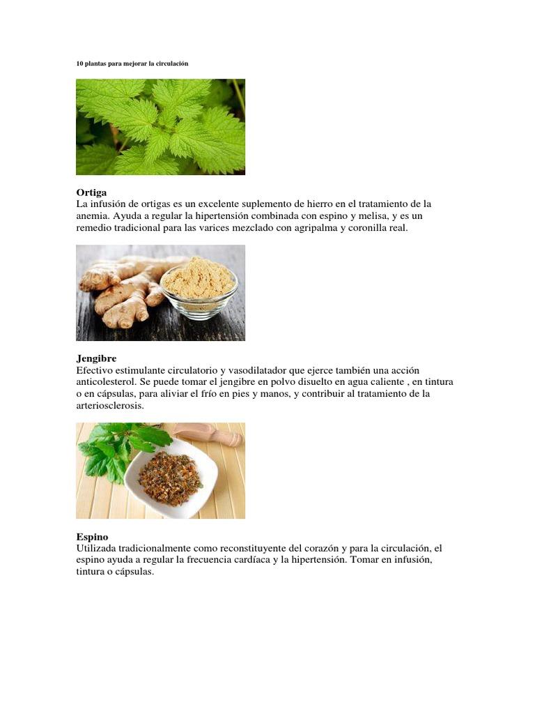 Hipertensión diurética a base de hierbas