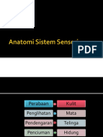 2. Anatomi Sistem Sensori