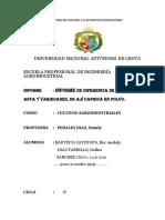 cultivos leyli informe del aji.docx