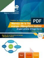 Ponencia_entregafinal_AngieOrtega.pptx