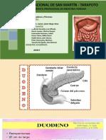 Grupo 03 - Duodeno y Páncreas