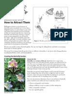 butterflies.pdf