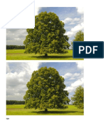 listopadno drveće.docx