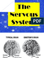 Olem Nervous SYSTEM NEWW