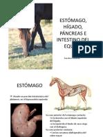 Estomago Intestino Pancreas Hig Equino