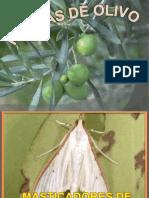 -olivo-1