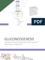 3. GLUCOGENOLISIS Y GLUCONEOGENESIS.pdf