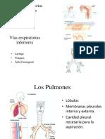 Vías respiratorias Superiores2