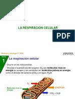 4-2-Ciclo_nitrogeno