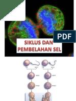 SIKLUS SEL1
