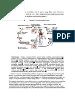 patofisiologi filariasis
