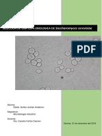 PRÁCTICA XIV Saccheromyces Cerevisiae (1)