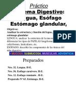 Practico Lengua Esofago Estomago 2014