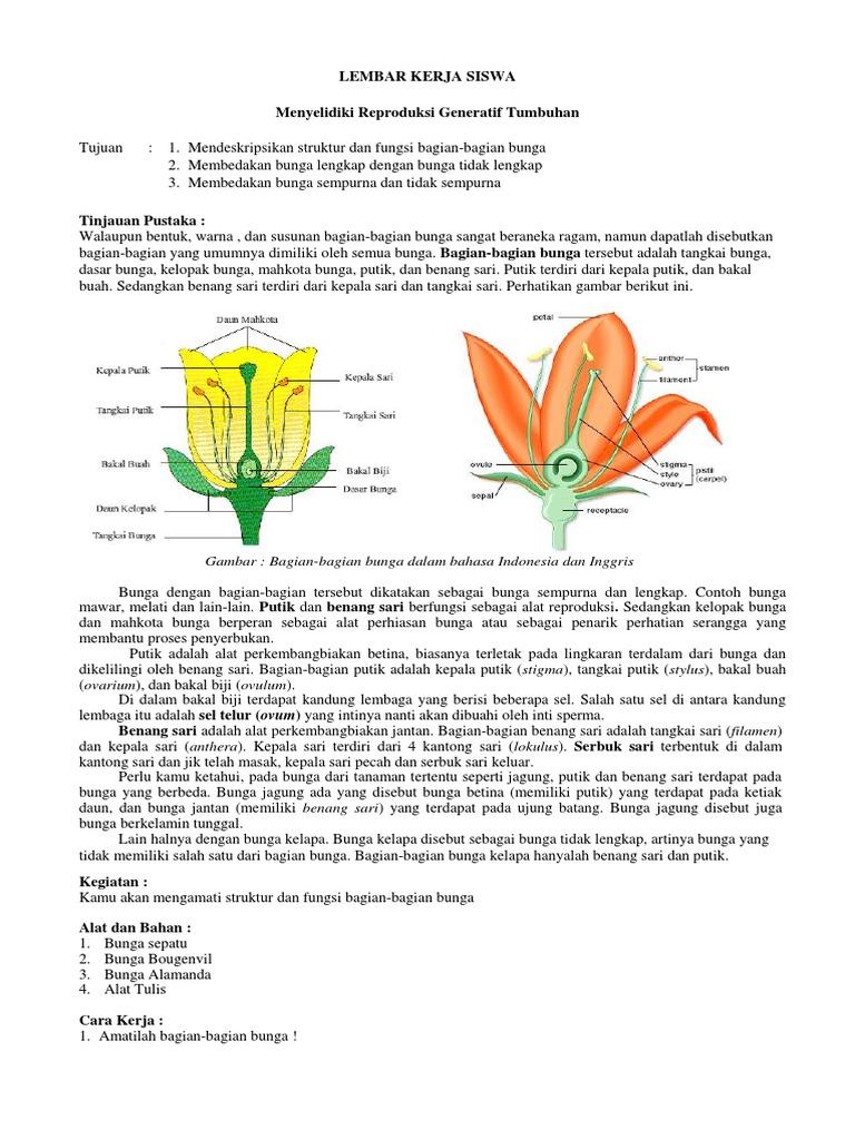 Unduh 52 Gambar Bunga Sepatu Beserta Gratis Terbaru