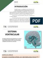 3.hidrocefalia