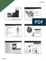 Hematopoyesis, el Globulo rojo  y eriptosis2015 (1).pdf