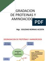 CATABOLISMO-AMINOACIDOS