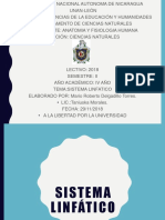 Sistema Linfatico12