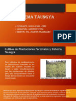 Especies forestales Condesan