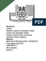 Practica 2 Molecular y Genetica