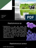 Seminário Staphylococcus Ssp
