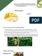 Piata Bananelor.