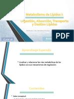 Clase 19 - Metabolismo de LÃ_pidos I