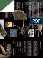 dinosa.pdf