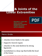 Bones and Joints - Anatomy of Lower Extremity