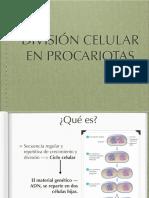 Reproducción celular en Procariotas