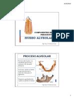 Componentes Del Periodonto_hueso Alveolar_05!10!2018