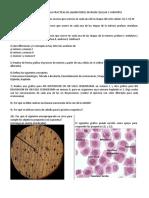 2-Preguntas Para Analisis Laboratorio 7 y 8-Division Celular y Cariotipo
