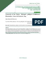 Nematodes of the Turkey Meleagris gallopavo (Galliformes