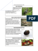 Fauna de Manglares Del Perú