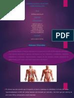 Diapositivas Sistema Muscular -2