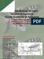 Morfologia Externa de Insectos 2017