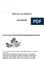 Bolile La Fasole