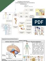 Mapa Conceptual  sistema nervioso Central y Autonomo