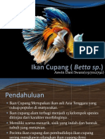 Ikan Cupang ( Betta Sp)