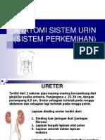 276537715 Anatomi Fisiologi Sistem Urinaria PPT
