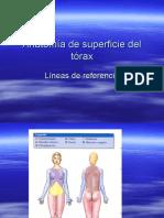 14.-Anatomía de superficie del tórax- líneas del tórax