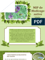 MIP de Medicago Sativa