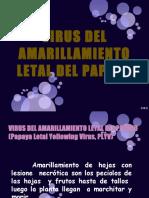 VIRUS DEL AMARILLAMIENTO LETAL DEL PAPAYO. modificado.pptx