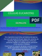 Tema3._Hongos_RESUMEN