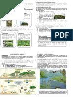 Ecosistemas y Su Ambiente 4to