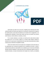 Blog Epigeness Del Estres (1)