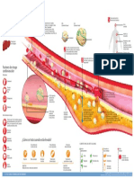 infografico colesterol