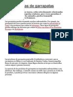 Picaduras de Garrapata3