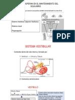 Sistema Vestibular ANATO-FISIO IngBM 2018-3